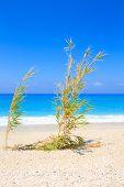 Sandy beach with bamboos Lefkas Greece