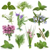 pic of hyssop  - Large herb leaf and flower selection used for culinary and medicinal purposes over white background - JPG