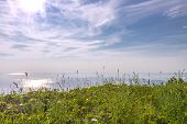 Blossoming Grasses In Front Of Ocean