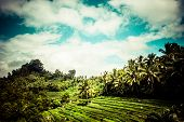 picture of land development  - Terrace rice fields in morning sunrise Ubud Bali Indonesia - JPG