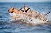 two dogs playing on the beach