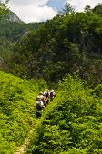 Tracking through forest of river Tre�njica gorge