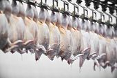 foto of slaughterhouse  - Food industry detail with poultry meat processing