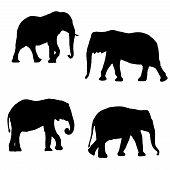 Black silhouettes of four elephants