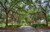 stock photo of tillandsia  - Couples and families enjoy time in the parks of Savannah Georgia between rain showers - JPG