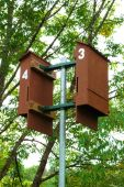 stock photo of sparta  - Bat houses at Burgess Falls State Park near Sparta - JPG