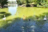 Steppe Lake