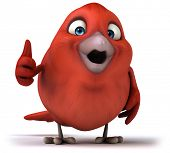 pic of robin bird  - Red bird - JPG