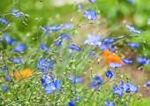 Blue flowers in sun light. Summer nature background