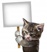 stock photo of spayed  - Angry cat holding a blank card sign as an annoyed and furious cute kitten feline with an enraged expression protesting and communicating a message pertaining to pet care on an isolated white background - JPG