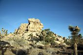 A rock formation with a face in it at Joshua Tree National Park Yucca Valley in Mohave desert Califo