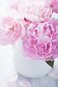 beautiful pink peony bouquet in vase