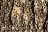 tree surface texture