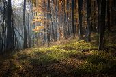 Ray of light shining in a forest in autumn