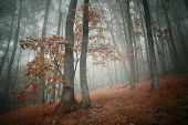 Autumn in a red forest with fog