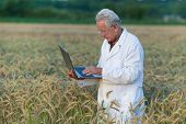 Agronomist With Laptop