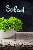 lettuce salad in a bowl and blackboard on rustic wooden table