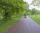 Man Walking Dogs In A Large Park