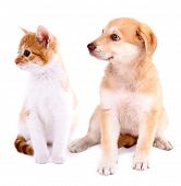 Little kitten and retriever puppy isolated on white
