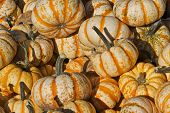Striped Gourds