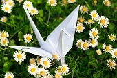 Paper Bird And Daisies