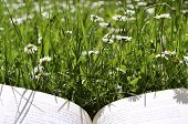 Reading On A Meadow A