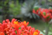 An insect on red flower in a beautiful garden