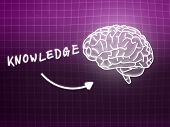 Knowledge Brain Background Knowledge Science Blackboard Pink