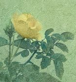 Yellow Rose Vintage Style Photo