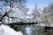 Frozen River With Rushes And Frost Trees Beyond The River