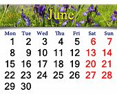 Calendar For May Of 2015 Year With Image Of Blossoming Iris