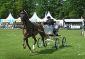 Single driving horse Netherlands