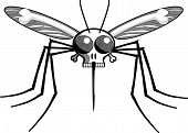Deaths head malaria mosquito