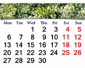 Calendar For May Of 2015 Year With Image Of Bird Cherry Tree