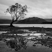The lonely tree at Lake Wanaka