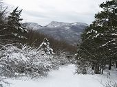 Winter Forest In The Crimean Mountains