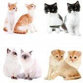 Set of four small kittens isolated on white
