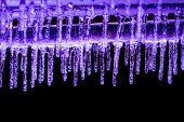 Purple Icicles