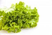 Bunch of green fresh salad