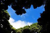 Abstract tree coronament