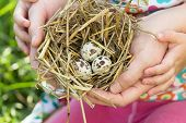 People Of Two Generations Holding Nest With Eggs