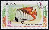 RAS AL-KHAIMAH - CIRCA 2006: A stamp printed in Ras al-Khaimah shows a fish Chaetodon auriga