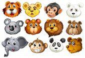 Illustration of many animal heads