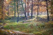 Autumn Landscape, Oak Forest, Morning