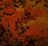 Spicy Red Bougainvillea Background poster