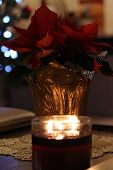 stock photo of poinsettia  - A lone poinsettia, lit by a candle