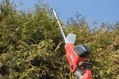 pic of electric trimmer  - Cutting Thuja by electric telescopic fence scissors. Blue sky in the backgrounds.