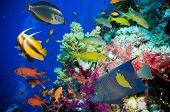 stock photo of fire coral  - Tropical Fish and Coral Reef on Red Sea - JPG