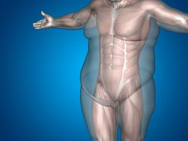 picture of big belly  - Concept or conceptual 3D fat overweight vs slim fit diet with muscles young man blue gradient background - JPG