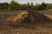 Harvest Compost Pile